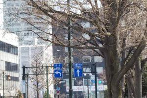 札幌大通公園の街路灯